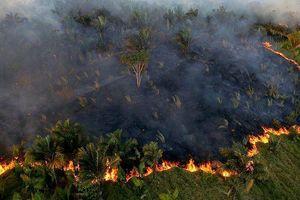 Tổng thống Bolivia đề nghị các nhà lãnh đạo G7 giúp chữa cháy ở rừng Amazon