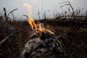 Brazil khước từ đề nghị giúp chữa cháy rừng Amazon của nhóm G7