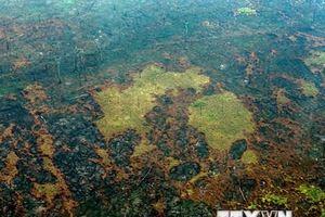 Brazil từ chối đề nghị của Nhóm G7 viện trợ chống cháy rừng Amazon