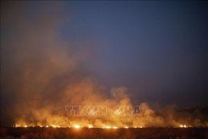 Brazil từ chối nhận viện trợ của G7 để dập cháy rừng Amazon