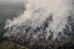Brazil nói không cần 20 triệu USD viện trợ cứu rừng Amazon, châu Âu nên lấy tiền mà trồng thêm cây