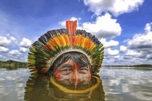 Ngất ngây trước hình ảnh đẹp mê hồn của rừng rậm Amazon trước khi bị cháy lớn