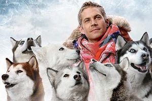 Nhìn từ phim Cậu vàng điểm lại những bộ phim cảm động nhất mọi thời đại về loài chó