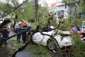 Hà Nội mưa gió khủng khiếp, 1 người bị cây đè tử vong