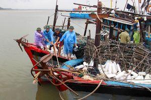 Các tỉnh Bắc Trung Bộ cấm biển, thu hoạch lúa chạy bão số 4