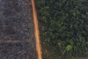 Các nước cam kết bảo vệ rừng Amazon