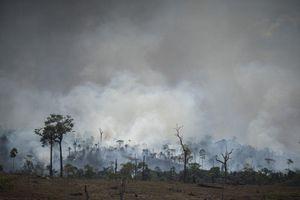 Brazil ban sắc lệnh cấm đốt rừng trong hai tháng