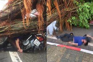 Mưa dông lớn, nam thanh niên bị cây đổ trúng người tử vong