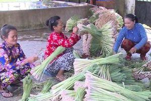 Tiền Giang: Cấp chứng nhận nhãn hiệu tập thể cho cây sả Tân Phú Đông
