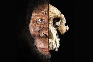 Hé lộ gương mặt tổ tiên lâu đời nhất của loài người