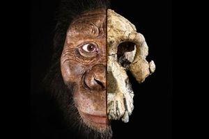 Tiết lộ khuôn mặt của tổ tiên loài người từ 3,8 triệu năm trước