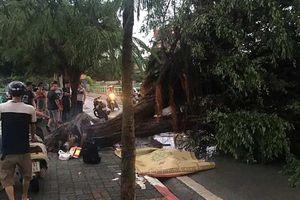 Mưa to gió giật khủng khiếp, cây đổ đè chết 1 người ở Hà Nội