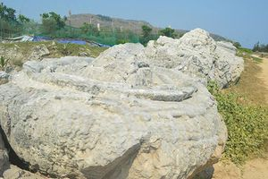 Cần bảo tồn di sản san hô hóa thạch trên đảo Lý Sơn
