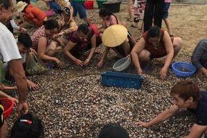 Người dân ào ra biển Cửa Lò vớt 'lộc trời' sau bão số 4