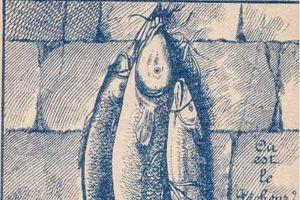 'Hoa mắt' với câu đố tìm người đánh cá trong bức ảnh