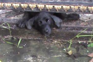 Giải cứu chú chó bị kẹt đầu vào cổng sắt suốt 2 ngày liền