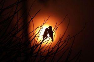 Ảnh động vật: Chim in bóng trời, thằn lằn tắm nắng...