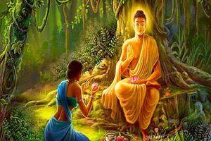 Phật dạy: Muốn hạnh phúc hãy làm điều này mỗi ngày, càng làm nhiều phúc đức càng lớn