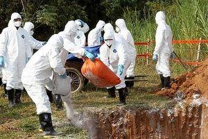 Hà Nội: 244 xã, phường đã qua 30 ngày không phát sinh bệnh dịch tả lợn châu Phi