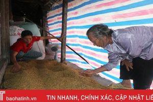 Hà Tĩnh mưa không ngớt, lúa đồng không thể gặt, thóc trong nhà mốc đen!