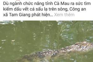 Cà Mau: 'Cá sấu nổi đầu trên sông' là 'tin vịt'?