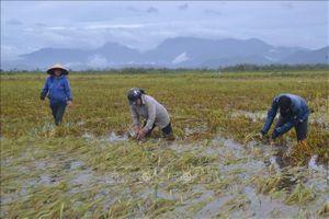 Mưa to gây úng ngập nhiều vùng tại Thừa Thiên - Huế, học sinh phải nghỉ học