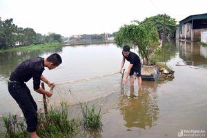 Hơn 3 tỷ đồng tiền cá của nông dân Nam Đàn trôi theo nước lũ
