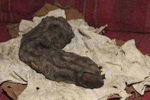 Giật mình ngón tay 'khủng' có thật của người khổng lồ