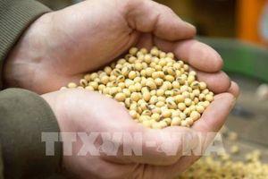 Giá lương thực giảm tháng thứ ba liên tiếp