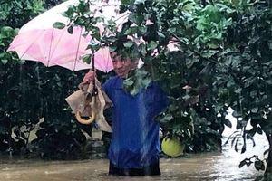 Người trồng bưởi ở Hà Tĩnh có nguy cơ trắng tay do mưa lũ