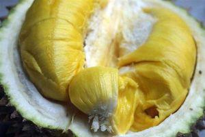 Dân buôn sầu riêng không bao giờ tiết lộ: 'Điểm vàng' để chọn quả chín tự nhiên không hóa chất, mùi dày 'ngập răng'