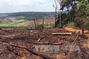 Đắk Nông: Gần 50 vụ khai thác rừng trái pháp luật