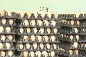 Giá trứng gia cầm tăng, người nuôi phấn khởi