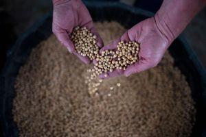 Trung Quốc sẽ mua thêm nông sản Mỹ để đạt thỏa thuận có lợi