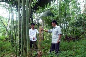 Phát triển tiềm năng của cây tre Việt Nam
