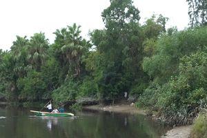 Cả xã hết hồn vì con cá sấu 50 kg bỗng xuất hiện trên sông