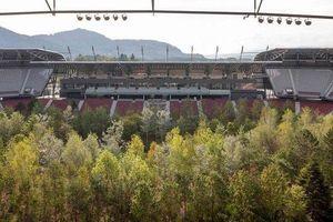 Khám phá rừng cây rậm rạp giữa sân vận động