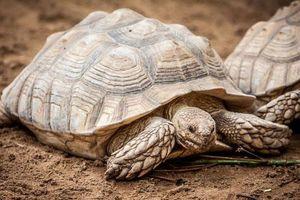 Những khám phá thật sự tuyệt vời về loài rùa
