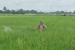 Điện Biên: Lo ngại ô nhiễm môi trường từ vỏ thuốc BVTV