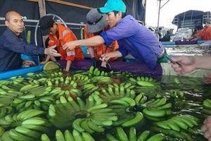 HAGL Agrico xuất khẩu trên 200 triệu USD từ trái cây