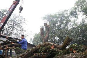 Tiết lộ nguyên nhân hoãn lần 2 phiên đấu giá gỗ sưa trăm tỷ ở Hà Nội