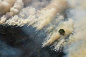 Cháy rừng Indonesia khiến Malaysia, Singapore chìm trong khói bụi