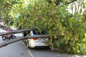 Cây xanh đổ trúng ôtô, tài xế thoát chết trong gang tấc