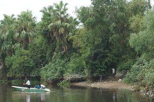 Lập tổ công tác vây bắt cá sấu trên sông Cầu Đông ở Hà Tĩnh