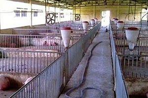 Đề cao trách nhiệm của người chăn nuôi