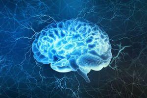 Phát hiện chức năng mới của tế bào thần kinh