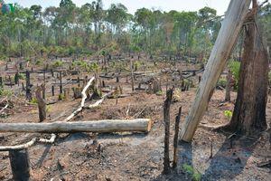 Ban quản lý rừng Ia Púch để mất hơn 1.200ha rừng ở Gia Lai