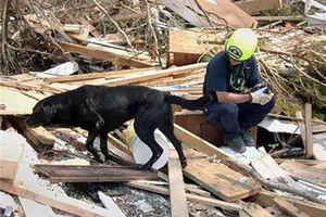 Câu chuyện về những chú chó cứu hộ phi thường ngày 11/9