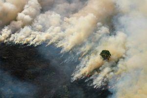 Cháy rừng Indonesia, Malaysia và Singapore ngập ngụa trong khói bụi