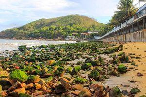 Cát vàng biến mất, bãi biển Quy Nhơn lởm chởm đá hộc